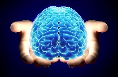 cerebro 1